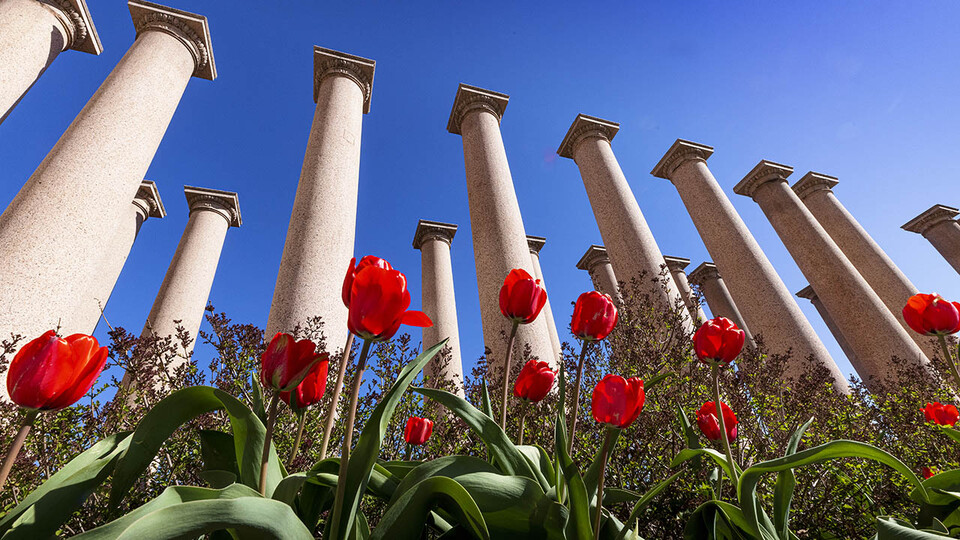 Stone columns and red flowers